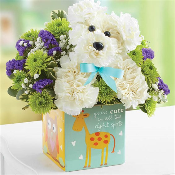 1-800-FLOWERS® IT\'S A-DOG-ABLE® BOY | 1-800-Flowers 4 Gift Seattle