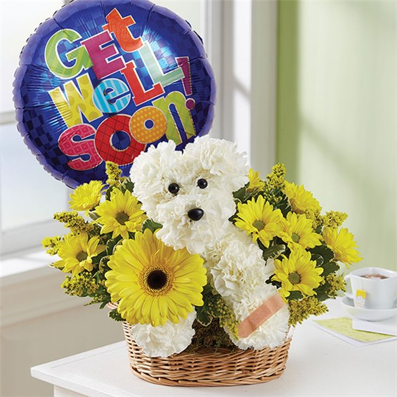 1-800-FLOWERS® SICK AS A DOG™   1-800-Flowers 4 Gift Seattle
